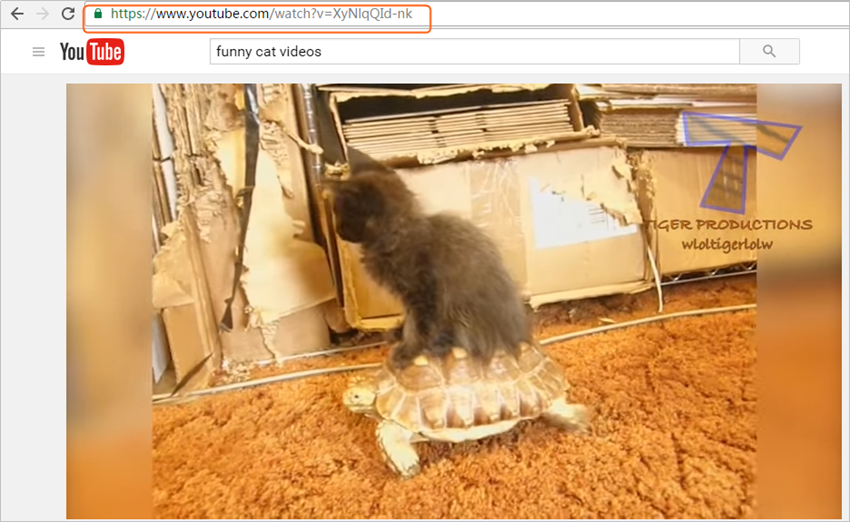 How to Download Funny Cat Videos for Free